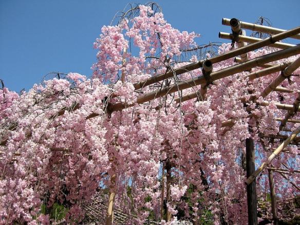 Heian Shrine 2013